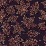 Vector autumn seamless pattern with oak, poplar, beech, maple, aspen and horse chestnut leaves outline on dark background. Vector autumn seamless pattern with vector illustration