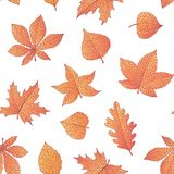 Vector autumn seamless pattern with oak, poplar, beech, maple, aspen and horse chestnut leaves and physalis of orange color. On the white background. Fall vector illustration