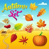Vector autumn set with autumn leaves, rowan and pumpkin stock illustration