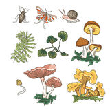 Vector autumn set of mushrooms, fern, plants and insects. Hand drawn elements isolated on the white background Royalty Free Stock Image