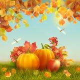 Vector Autumn Thanksgiving Card Stock Image