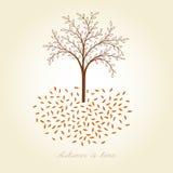 Vector autumn tree. Autumn card Stock Photography