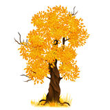 Vector autumn tree isolated on white, vector Royalty Free Stock Photos