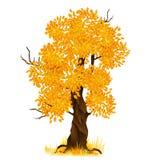 Vector autumn tree isolated on white, vector Royalty Free Stock Photos
