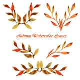 Vector autumn watercolor leaf pattern template Stock Image