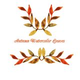 Vector autumn watercolor leaf pattern template Stock Photography