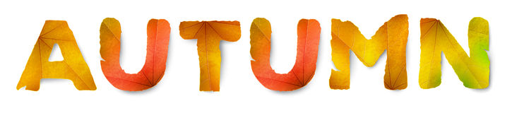 Vector Autumn word, made from autumn leaves Stock Photography