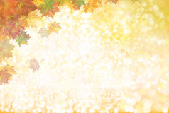 Vector autumnal  background. Vector autumnal leaves on bokeh background Royalty Free Stock Images