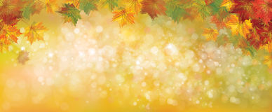 Vector autumnal background. Vector autumnal leaves on bokeh background, blurred effect Stock Photos