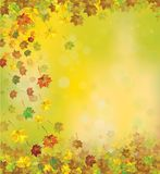 Vector autumnal  background. Vector autumnal maple leaves   background Royalty Free Stock Photo