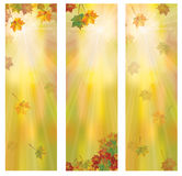 Vector autumnal banners. Vector autumnal leaves vertical banners Royalty Free Stock Images