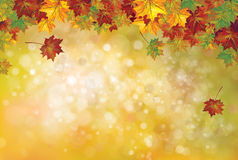 Vector autumnal leaves background. Vector autumnal leaves on bokeh background Royalty Free Stock Photo