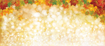 Vector autumnal leaves background. Vector autumnal leaves on bokeh background Stock Image