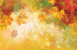 Vector autumnal leaves background. Vector autumnal leaves on bokeh background, blurred effect Stock Photography