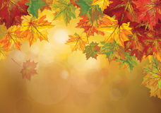 Vector autumnal leaves background. Autumnal  colorful leaves on bokeh background with space for text Royalty Free Stock Photo