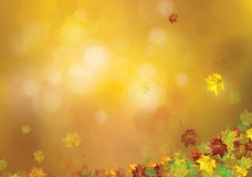 Vector autumnal leaves background. Vector autumnal leaves on bokeh background Stock Photos