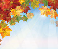 Vector of autumnal leaves on blue sky background. Stock Photography