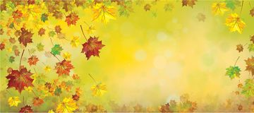 Vector autumnal leaves background. Vector autumnal leaves on bokeh background Stock Photography