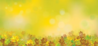 Vector autumnal leaves background. Vector autumnal leaves border, bokeh  background Stock Photos