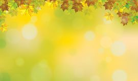 Vector autumnal leaves  background. Vector autumnal leaves border, bokeh  background Stock Photography