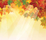 Vector of autumnal leaves on yellow background. Royalty Free Stock Image