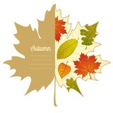 Vector autumnal maple leaf background. Background with autumn leaf. Label design. Season backdrop. Autumn template Royalty Free Stock Photography