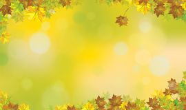Vector autumnal maples  leaves  background. Vector autumnal maples  leaves border, autumn  background Stock Photos