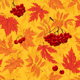 Vector Autumnal seamless background with leaf and ashberry Stock Images
