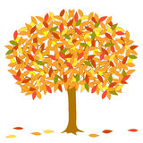 Vector autumnal tree. Vector autumnal tree with multicolor leaves on white bacground Royalty Free Stock Photos