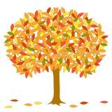Vector Autumnal Tree. Royalty Free Stock Photos