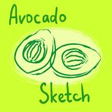 Vector avocado sketch Royalty Free Stock Photos