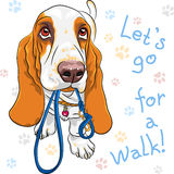 Vector baby dog Basset Hound breed Stock Photography