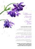 Vector background with  aquilegia nasturtium Stock Photos