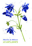 Vector background with  aquilegia nasturtium Stock Photography
