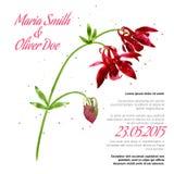 Vector background with  aquilegia nasturtium Stock Images