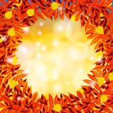 Vector background with autumn decor Stock Images