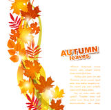 Vector background with autumn leaves Royalty Free Stock Photos