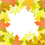 Vector background with autumn leaves around white space, in red,. Green, white and orange color Royalty Free Stock Photo