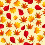 Vector background with autumn leaves. Seamless pattern with autumn leaves. Vector illustration. Cartoon style. Chaotically located yellow and red leaves on light Stock Images