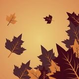 Vector Background With Autumn Leaves And Space For Text Stock Photos