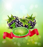 Vector background with blackberries and red ribbon Stock Photo