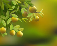 Vector background with branches lemons Stock Photography