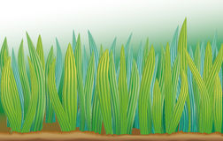 Vector background with bright green grass Royalty Free Stock Photography