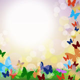 Vector background with butterflies and grass. Vector background with colorful butterflies, green grass, bubbles and the words Stock Photography