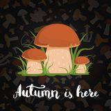 Vector background with cartoon mushrooms and lettering. Vector banner poster background with cartoon mushrooms and lettering illustration Royalty Free Stock Photo