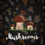 Vector background with cartoon mushrooms and lettering. Text isolated illustration Stock Photo