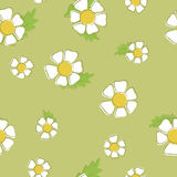 Vector background of chamomiles. Seamless pattern. Of white flowers on a green background. Suitable for printing on clothing and bedding vector illustration