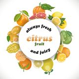 Vector background with citrus fruits in a circle and the words Royalty Free Stock Photography