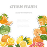 Vector background with citrus fruits Stock Photography