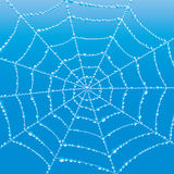 Vector background. Cobweb. Stock Photography